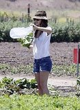 Rachel Bilson bagged her own veggies.