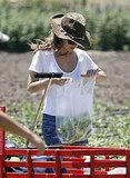 Rachel Bilson took stock of her fruits and vegetables.