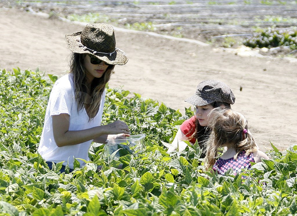 Rachel Bilson filled up her bag with veggies.