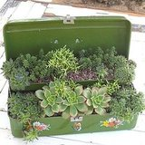 Here's an unusual tabletop succulent display idea: use an old metal tackle box! Source