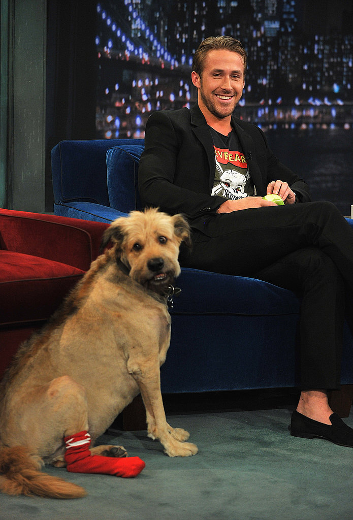 Ryan Gosling's dog.