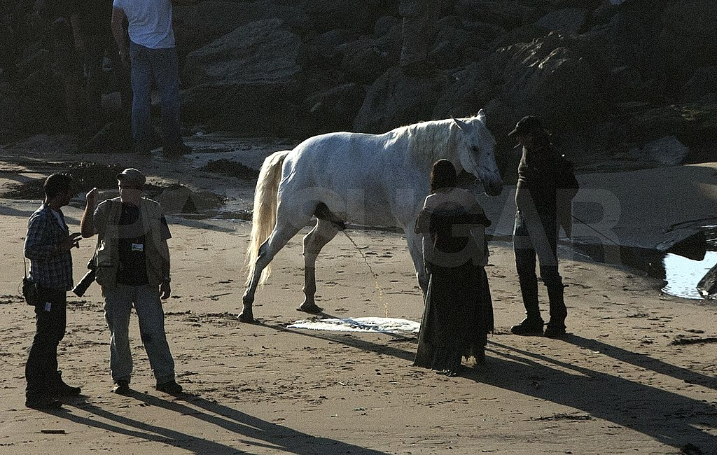 Kristen Stewart's white horse shared a scene with her.