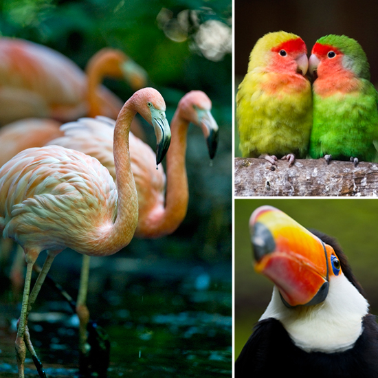 pics photos   birds for sale exotic