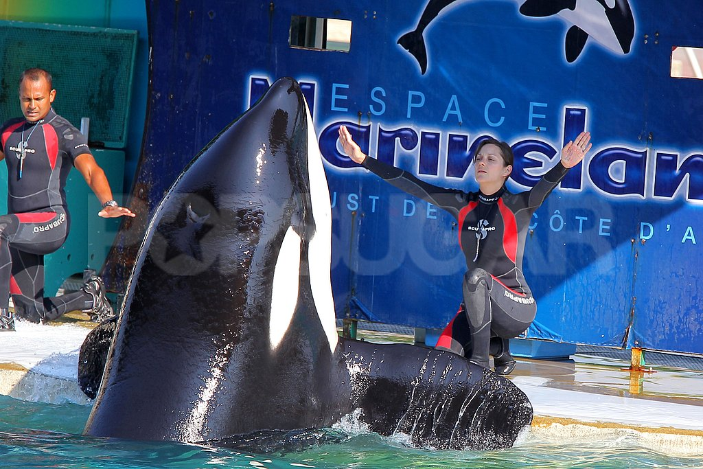 Marion Cotillard practiced signals with an orca whale.