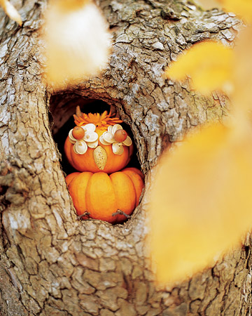 Wise Owl Pumpkin