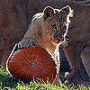 Hanover Zoo Halloween Celebration