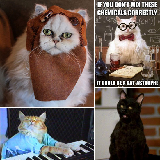 8 Cats Ruling the Internet With Geekiness Right Meow