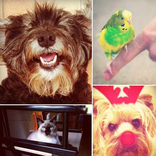 Pet Photography on Instagram