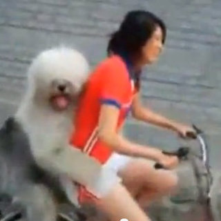 Funny Video of Dog Riding a Bicycle
