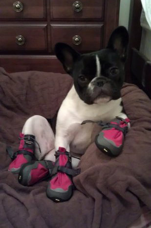 Pet Pic of the Day: New Booties