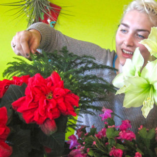 Holiday Flower and Bouquet Tips