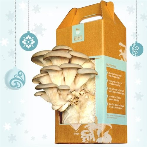 Mushroom Kit - Yields up to 1 1/2 lbs in 10 Days