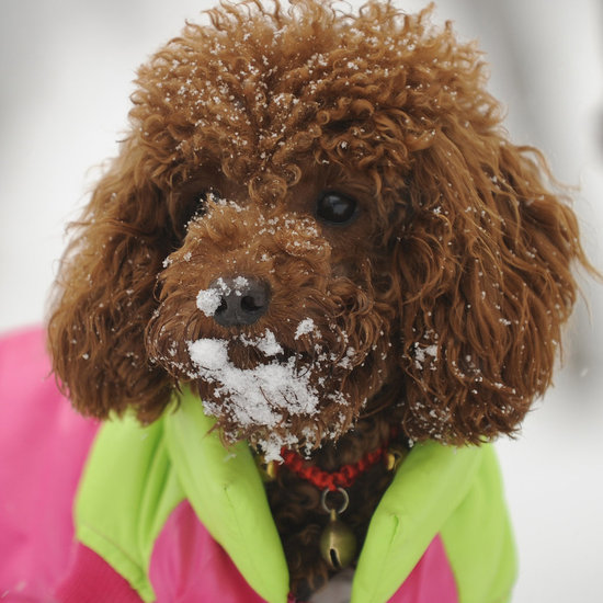 Bundle Up! Eight Dogs Wearing Puffy Coats