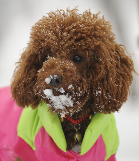 Once enveloped in the warmth of a puffy coat, snow play is fair game. Source: Getty Images