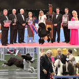 Reaching New Heights at the 2011 AKC/Eukanuba National Championship