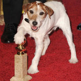 The Artist's Uggie the Dog at Golden Globes Pictures