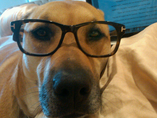 Lauren Conrad shared a picture of her dog Chloe trying on her chic specs. Source: Twitter user laurenconrad