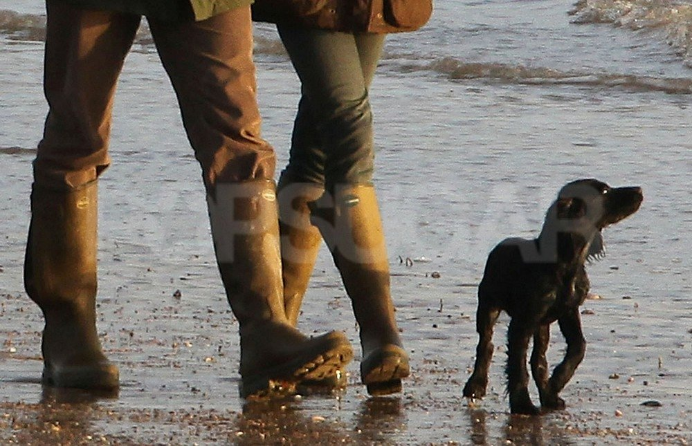 Prince William and Kate Middleton's Cocker Spaniel puppy enjoyed the beach.
