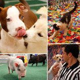 The Best Moments From Sunday's Puppy Bowl VIII