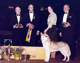 Ch Innisfree's Sierra Cinnar, a Siberian husky, won in 1980. Source: American Kennel Club Archives