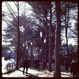 A Winter Sonata