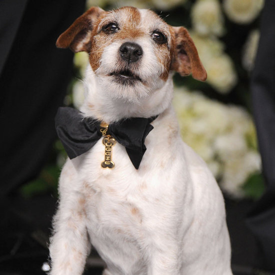 Uggie's All About Gilded Hearts and Golden Statuettes
