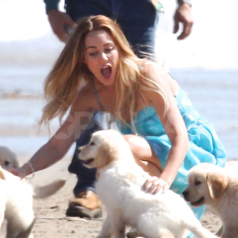 Lauren Conrad couldn't keep track of all of the puppies!