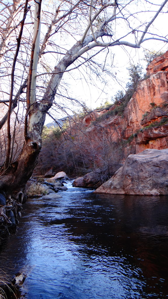 Oak Creek in Pop Color