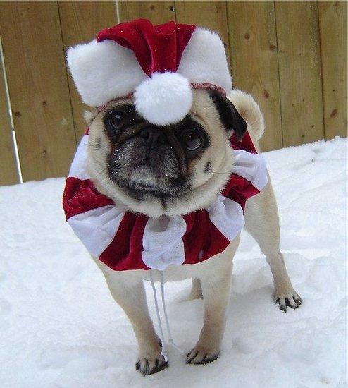 Pug Elf