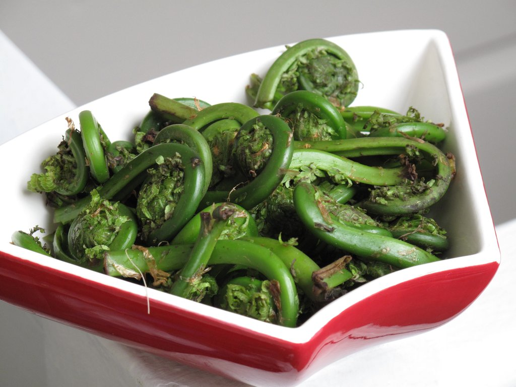 The Spring Food: Fiddlehead Ferns
