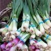Spring Onions Recipes