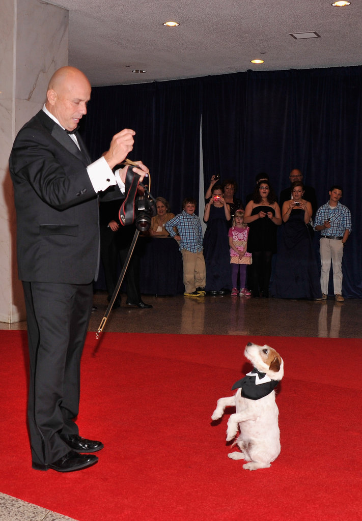 Uggie amazed onlookers on the red carpet.