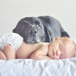 Introducing Dog and New Baby