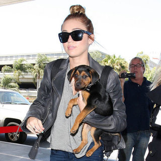 Miley Cyrus and New Puppy Happy Pictures