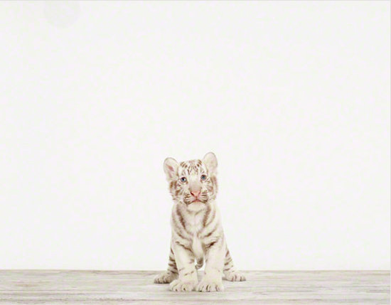 Sharon Montrose Animal Print ($25-$1,950)
