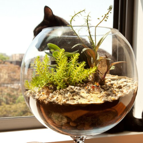 Terrarium DIY Pictures