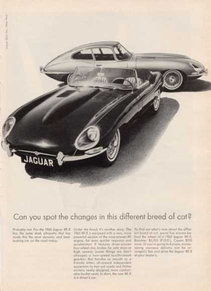"The ""different breed of cat"" slogan makes an appearance in this Jaguar ad."