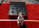 Uggie Gives Two Paws Up For His Last Hurrah
