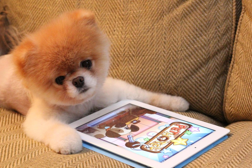 Boo's weekend activities: lounging on the couch with his iPad.
