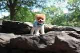 Boo stays fit through hiking and mountain climbing.