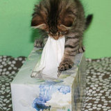 We have a tissue issue on our hands! Source: Flickr user prettyinprint