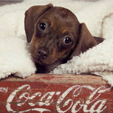 Advertising cuteness or advertising Coca-Cola? Source: Flickr user latteda