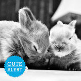 Awww-Stentatious Displays of Cute