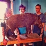 Tony Hawk shared this photo of himself with a stuffed boar. Source: Instagram user tonyhawk