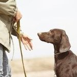 Essential Hand Signals For Dogs