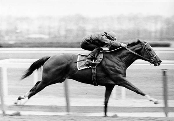 Equestrian Escape