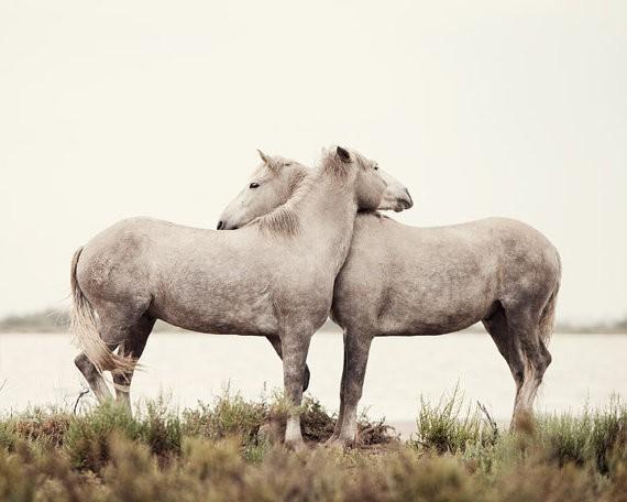 Agenda :: Equestrian Escape № 01
