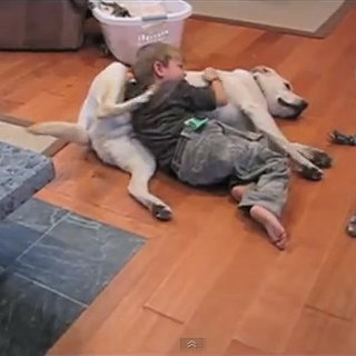 Dog and Child Back-Scratching Video