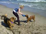 Chelsea Handler hung out with her dogs at the beach.  Source: Twitter user chelseahandler