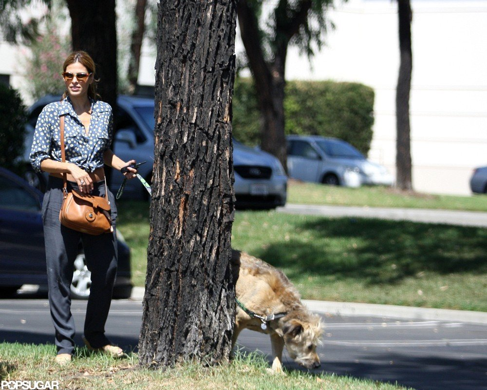 Eva Mendes watched over Ryan Gosling's dog in LA.